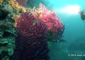 Lo storico Diving Center a San Vito lo Capo