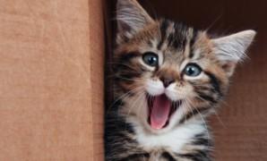 Come accogliere un nuovo gattino in casa