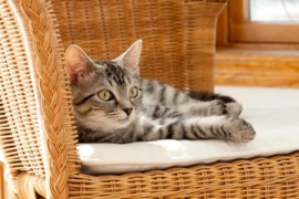 Come rendere sicura la casa per il nostro gatto