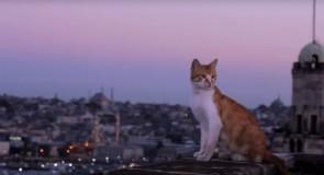Istanbul è la città dei gatti, qui ne troverete più di qualunque altro posto