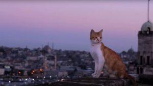 città dei gatti