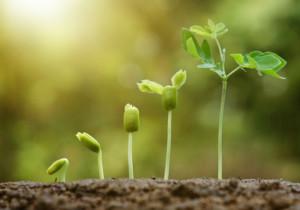 Come dar vita ad un perfetto orto biologico